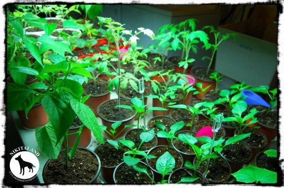 PLANTS 5-7-14