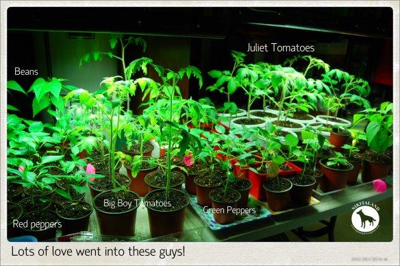 PLANTS2 5-15-14