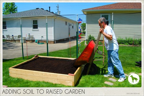 ADDING SOIL TO RAISED GARDEN 5-31-14
