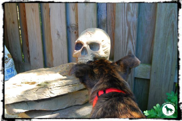 BELLA FOUND A SKULL IN THE GARDEN