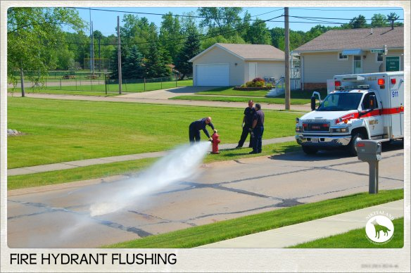 FIRE HYDRANT FLUSHING2 6-6-14