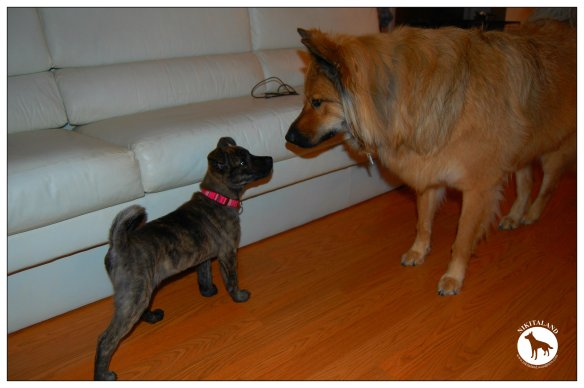 BELLA AND NIKITA MEET FOR THE FIRST TIME