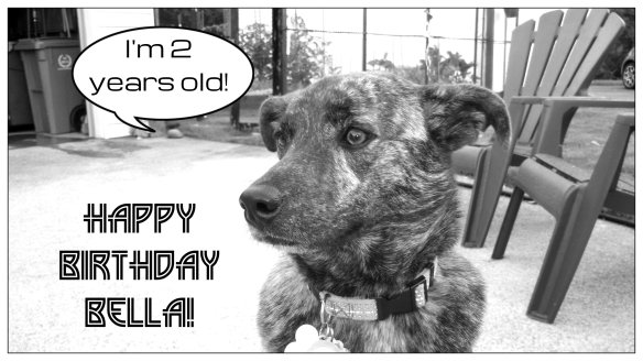BELLA BIRTHDAY 2 YEARS OLD 6-29-14