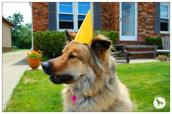 NIKITA IN BIRTHDAY HAT