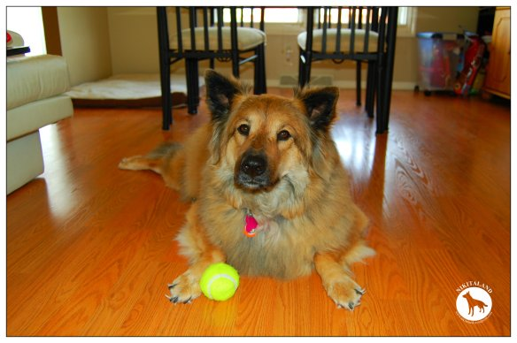 NIKITA WITH TENNIS BALL