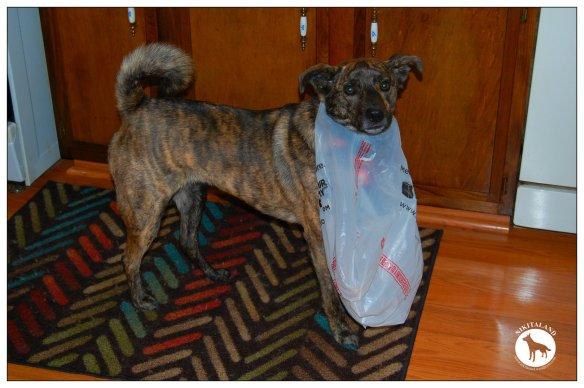 BELLA STUCK IN BAG