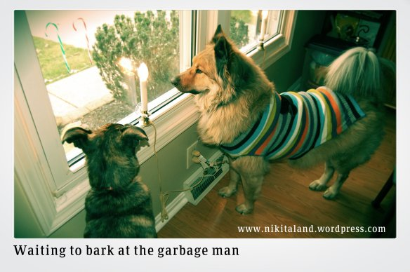 WAITING TO BARK AT GARBAGE MAN