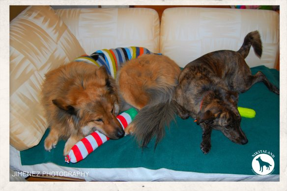 1-7-15 NIKITA AND BELLA NAPPING