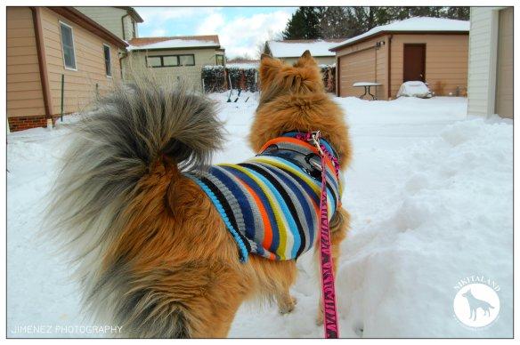 1-9-15 NIKITA IN THE SNOW1