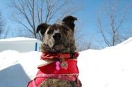 Bella, King of the snow mound!