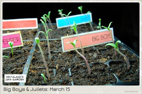 BIG BOYS AND JULIETS 3-15-15