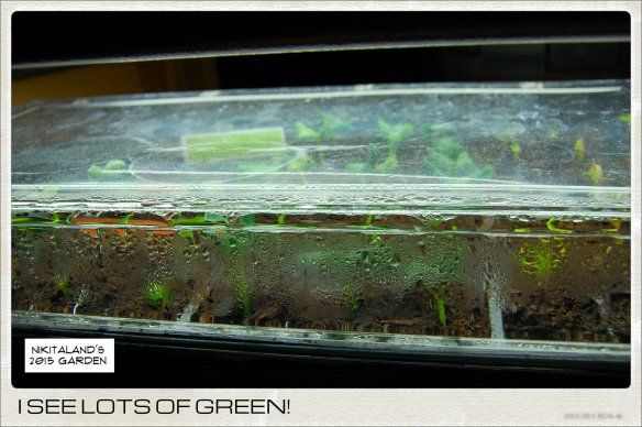 GREEN SEEDLINGS 3-10-15