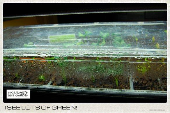 GREEN SEEDLINGS 3-10-15