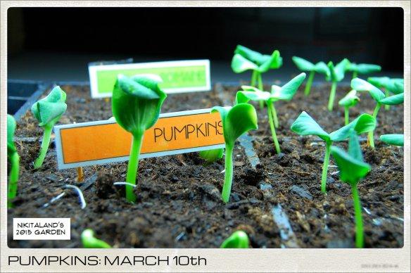 PUMPKINS 3-10-15