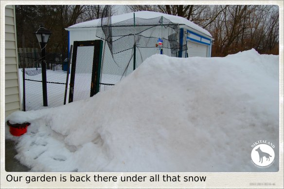 SNOWED IN GARDEN