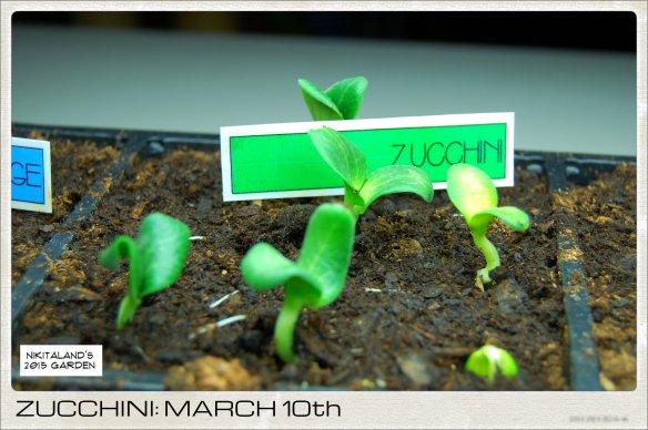 ZUCCHINI 3-10-15
