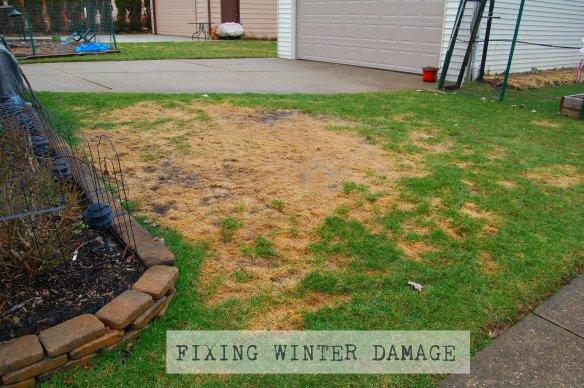 FIXING WINTER DAMAGE